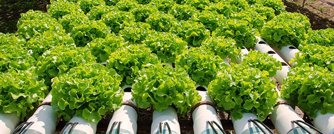 ag-slider-organic-farming