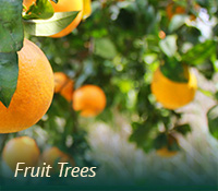 box-ag-fruittrees