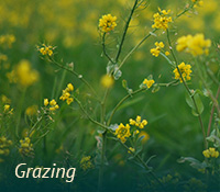 box-ag-grazing