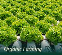 box-ag-organic