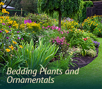 box-landscaping-ornamentals