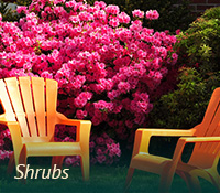 box-landscaping-shrubs