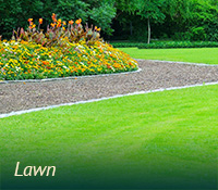 box-lawngarden-lawn