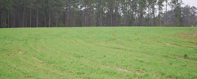 hunting-slider-foodplot