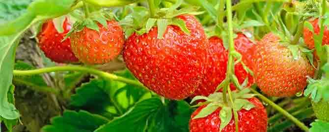 lawngarden-slider-fruit