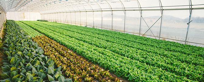 ag-slider-commercial-farming