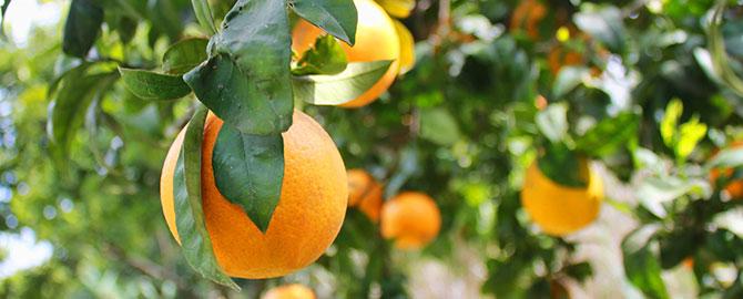 ag-slider-fruit-trees