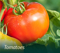box-lawngarden-tomatoes