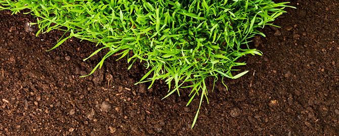 turfgrass-slider-sod